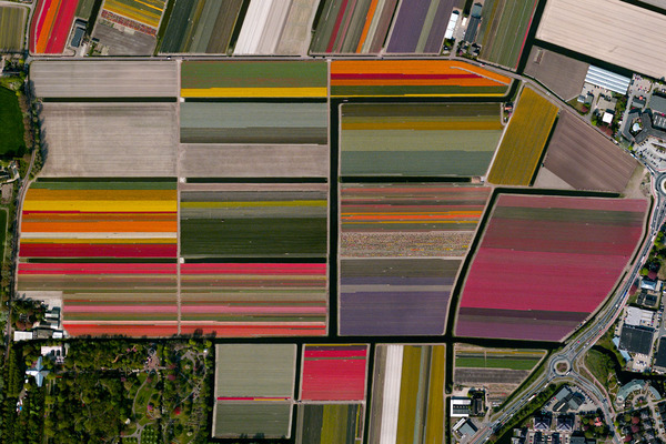 Tulip Fields – Lisse, The Netherlands