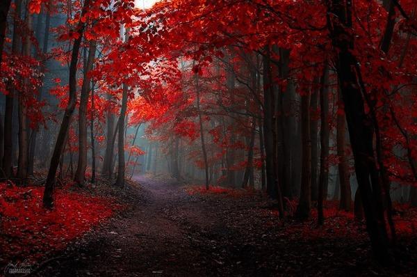 秋といえば紅葉や落葉の季節!美しすぎる秋の森の画像20枚 (4)