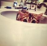 シンクに収まる!洗面台が大好きな可愛い猫達を集めたよ!