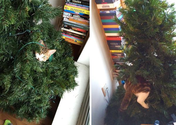 猫、あらぶる!クリスマスツリーに登る猫画像 (27)