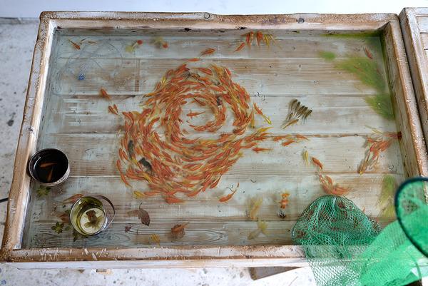 立体的で本物みたい!日本人が描く金魚すくいの絵が凄い (1)