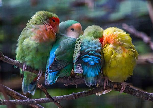 小鳥が温まる為に皆で寄り添っている可愛い画像 (9)