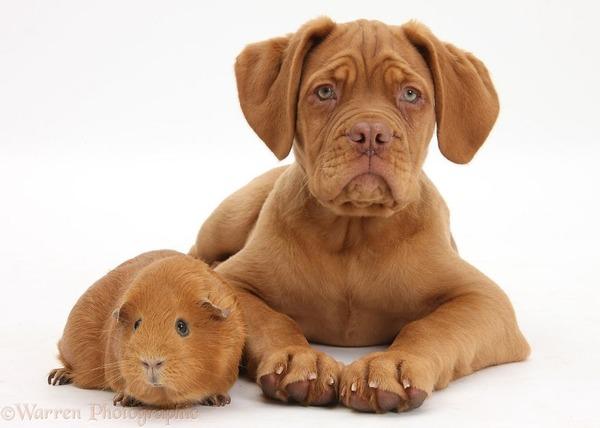 似てる!親が違うのにそっくりな動物画像30枚 (20)