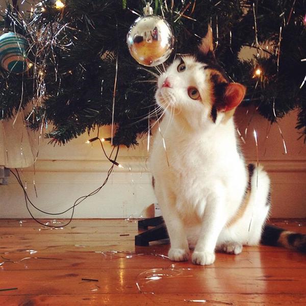 猫、あらぶる!クリスマスツリーに登る猫画像 (9)