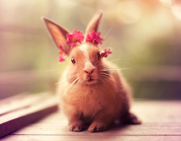 お花をいっぱいつけたウサギ
