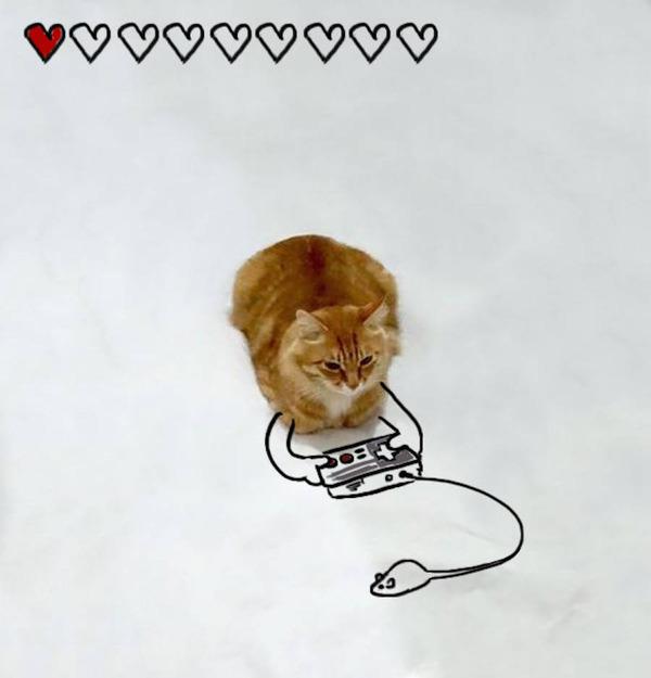 才能の無駄遣い?香箱座りの猫の画像にみんなで落書き! (13)