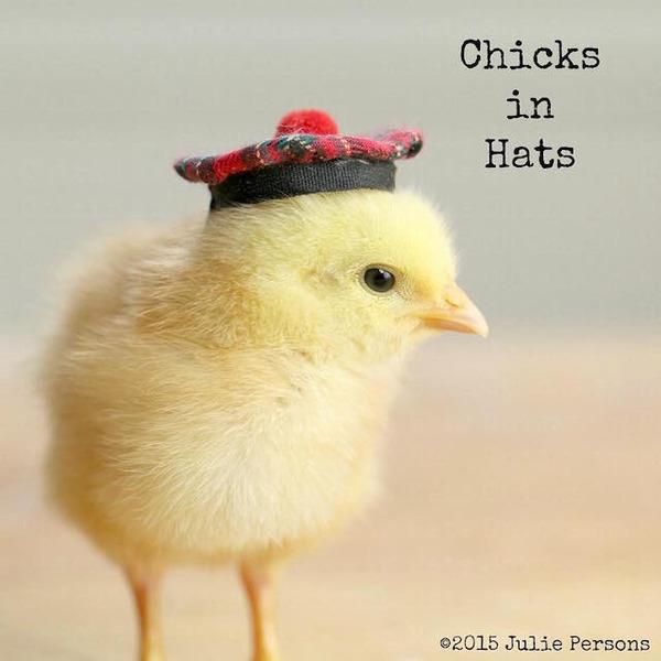 お洒落にきめるぜ!帽子を被ったヒヨコの画像 (11)