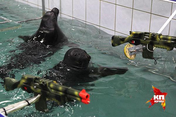SEALS,ロシアのオットセイの軍事訓練、VEデー 8