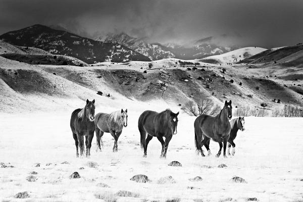 野生の馬の写真 (2)