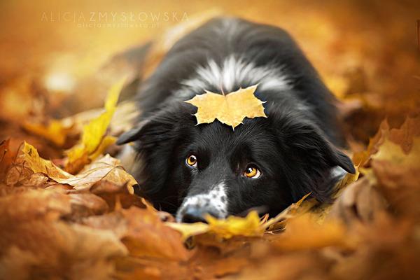 紅葉や秋の森の中を楽しむ動物たちの画像 (6)