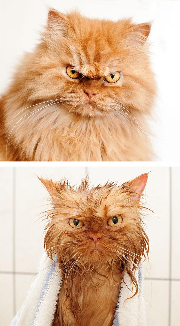 もふもふな動物たちがお風呂で変貌する…!【犬猫画像】 (15)
