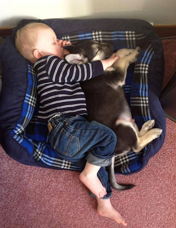 ペットは大切な家族!犬や猫と人間の子供の画像 (82)