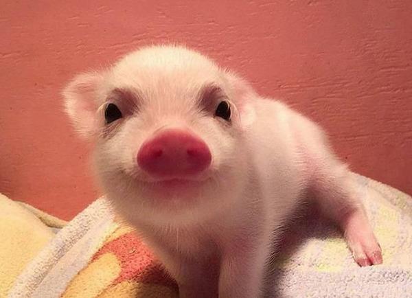 ニッコリ。幸せそうな笑顔が素敵な動物画像特集! (17)