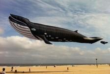 空の水族館!超大きいシロナガスクジラの凧がビーチに浮かぶ