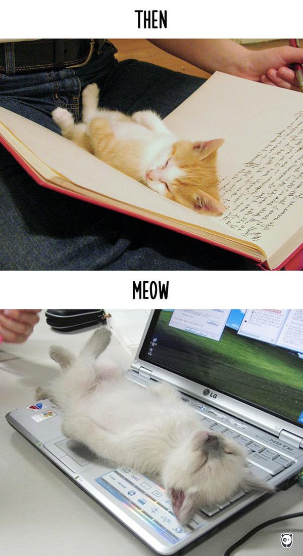 【猫画像】猫の生活を過去と現在で比較! (5)
