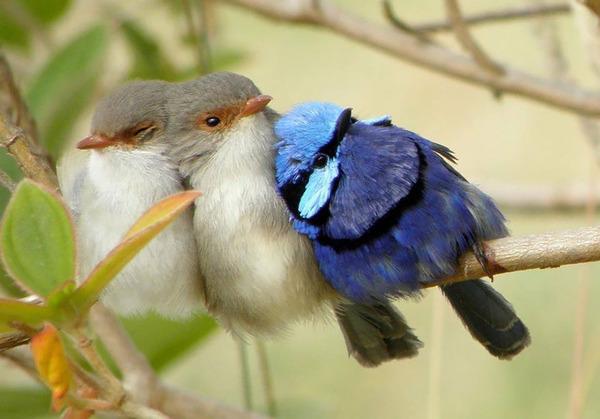 小鳥が温まる為に皆で寄り添っている可愛い画像 (12)