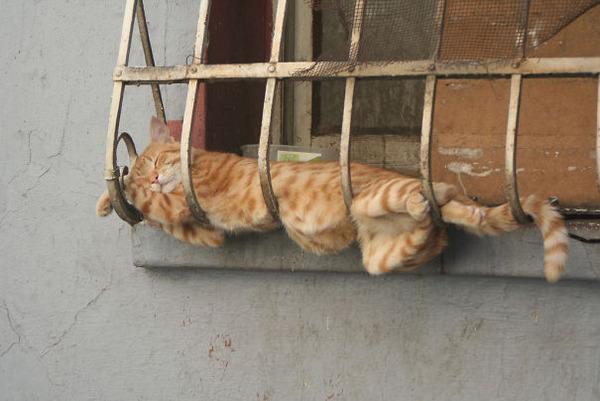 寝てるだけなのに…かわいすぎる猫たちの画像 (7)