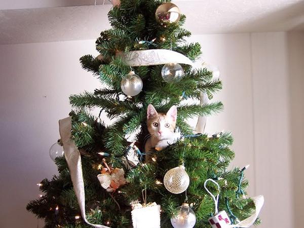 猫、あらぶる!クリスマスツリーに登る猫画像 (12)