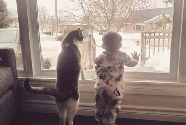 ペットは大切な家族!犬や猫と人間の子供の画像 (8)