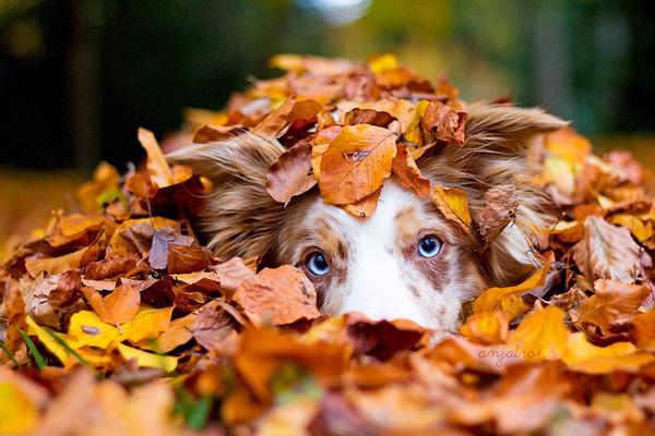 紅葉や秋の森の中を楽しむ動物たちの画像 (12)
