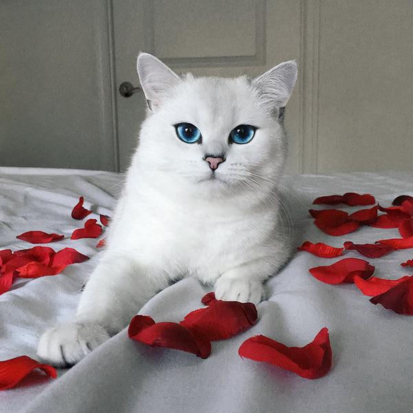 美しい…。綺麗な青い瞳をした白猫が話題!【猫画像】 (15)