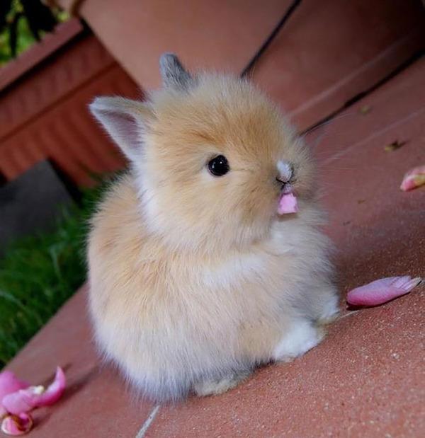 超ふわふわ!モフモフで愛らしいウサギの画像20枚 (4)
