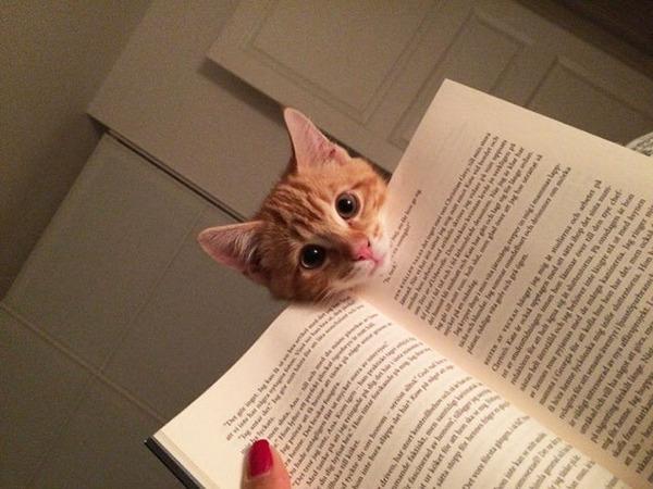 本を読んでいるとデレてくる猫