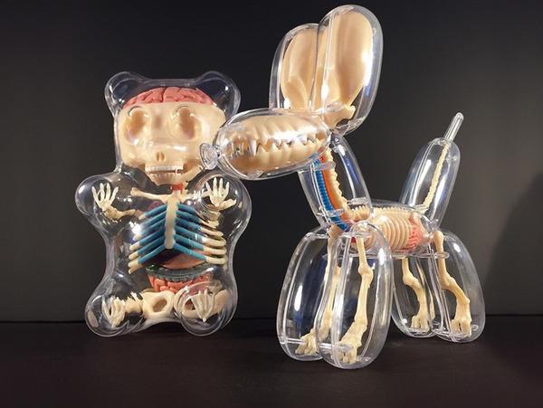 骨や内臓まで丸見え!解剖学のような動物のスケルトンの玩具 (1)