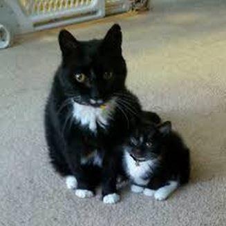 大人猫と子供猫の仲良し画像 (4)
