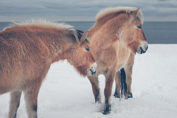 野生の馬の写真 (3)