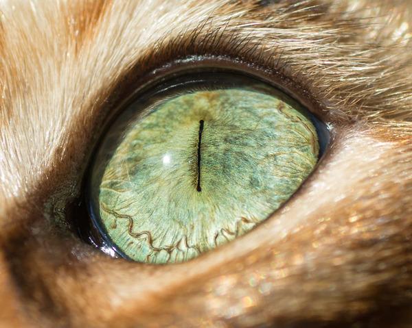 まさにキャッツアイ!綺麗な猫の瞳を撮影した画像16枚 (2)