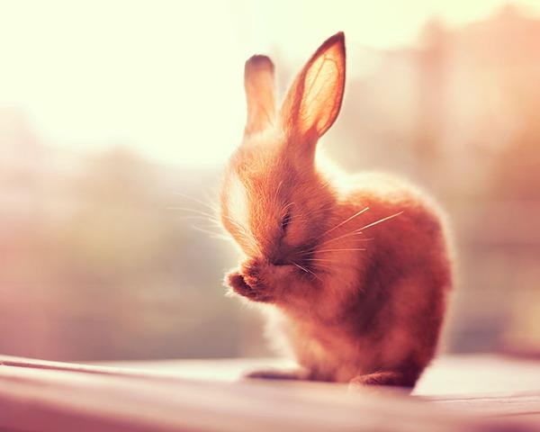 ウサギのグルーミングは可愛い