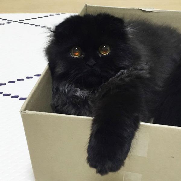 「まっくろくろすけ」みたいな黒猫画像!黒いモフモフ (6)
