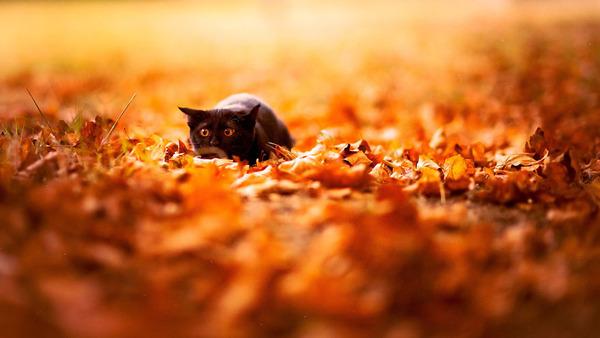 紅葉や秋の森の中を楽しむ動物たちの画像 (4)