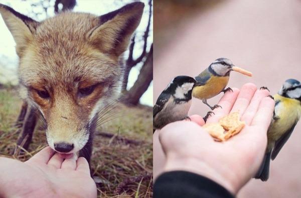フィンランドの野生動物 4