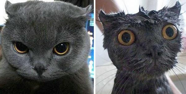 もふもふな動物たちがお風呂で変貌する…!【犬猫画像】 (8)