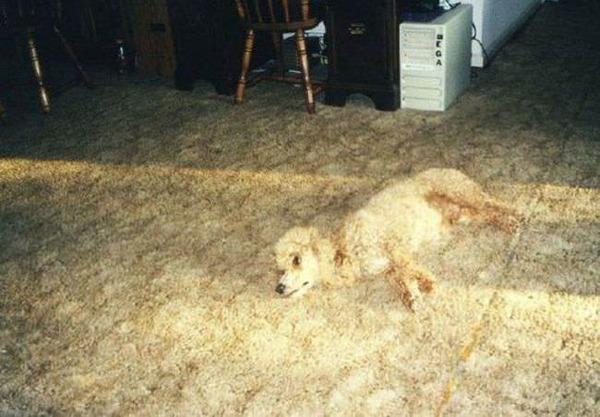 絨毯の柄に擬態した犬