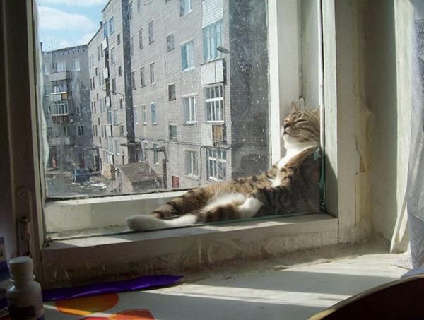 寝てるだけなのに…かわいすぎる猫たちの画像 (20)