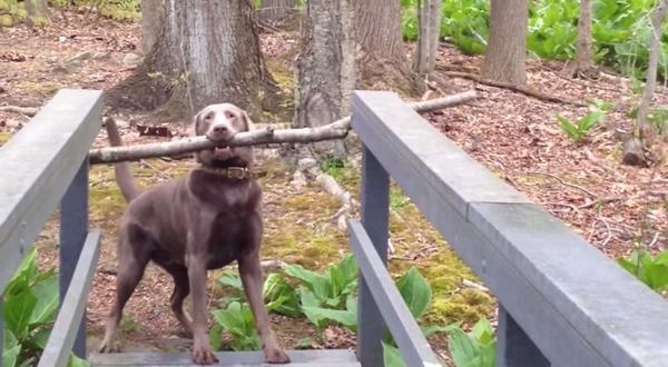橋を渡れない犬