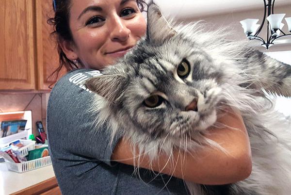 でかすぎる!大型のイエネコ長毛種メインクーン画像【猫】 (13)