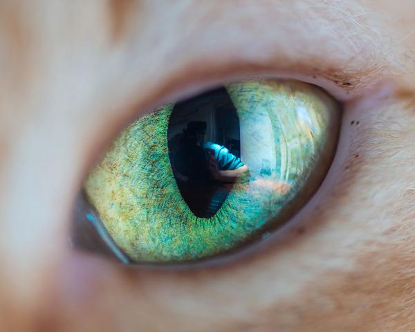 まさにキャッツアイ!綺麗な猫の瞳を撮影した画像16枚 (1)