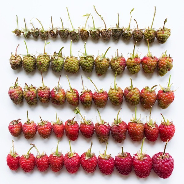 果物のカラフルなグラデーション アート写真 Brittany Wright 2