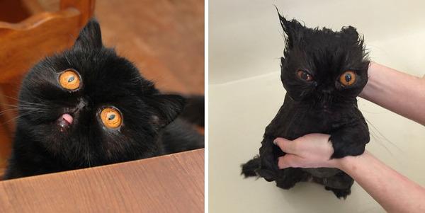 もふもふな動物たちがお風呂で変貌する…!【犬猫画像】 (27)