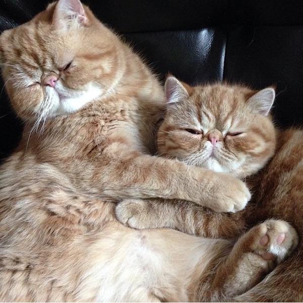 猫、アンガスとシェイマス angus-seamus 3