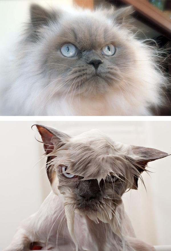 もふもふな動物たちがお風呂で変貌する…!【犬猫画像】 (24)