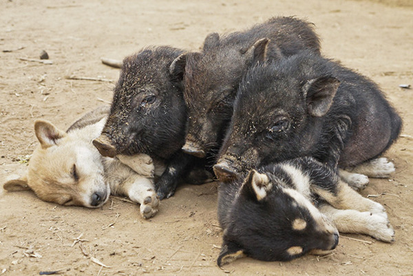 どこででも居眠りしちゃう子犬の可愛い画像 19