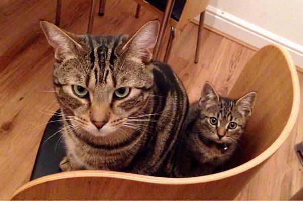 大人猫と子供猫の仲良し画像 (8)