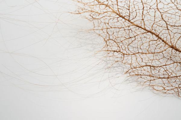 超繊細!人間の髪の毛で作るリアルな木の葉 (2)