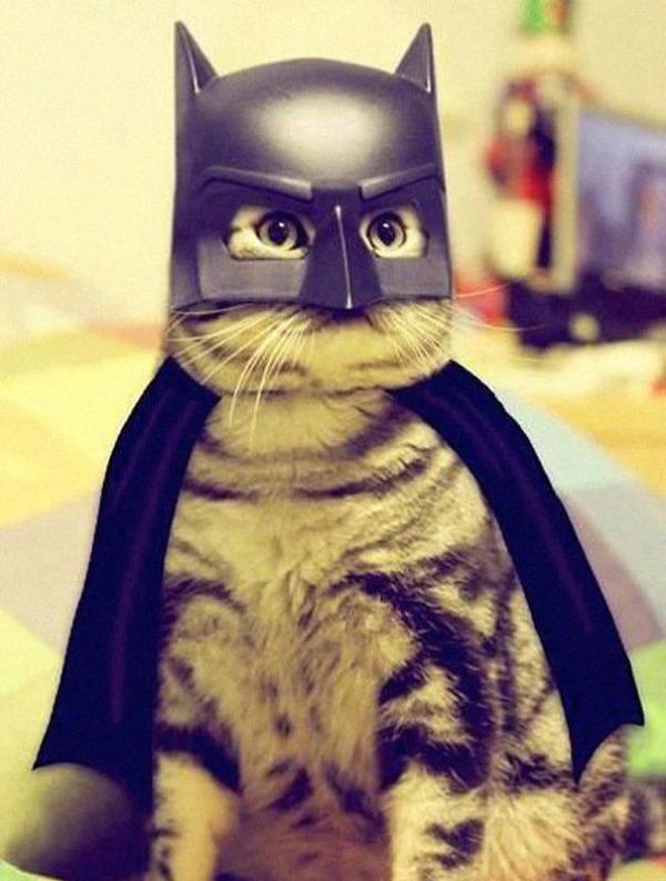 コスプレ猫!ハロウィンだし仮装した猫画像 (10)