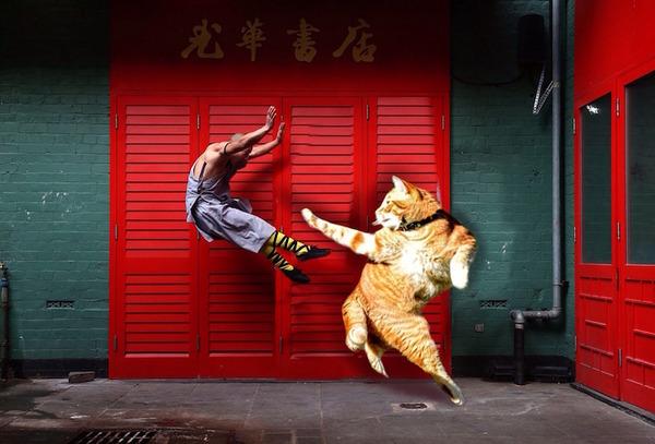 躍動感ありすぎる猫の写真が撮れたので海外でコラ画像バトル (9)